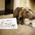 Dog Shaming with Brooklyn Skye
